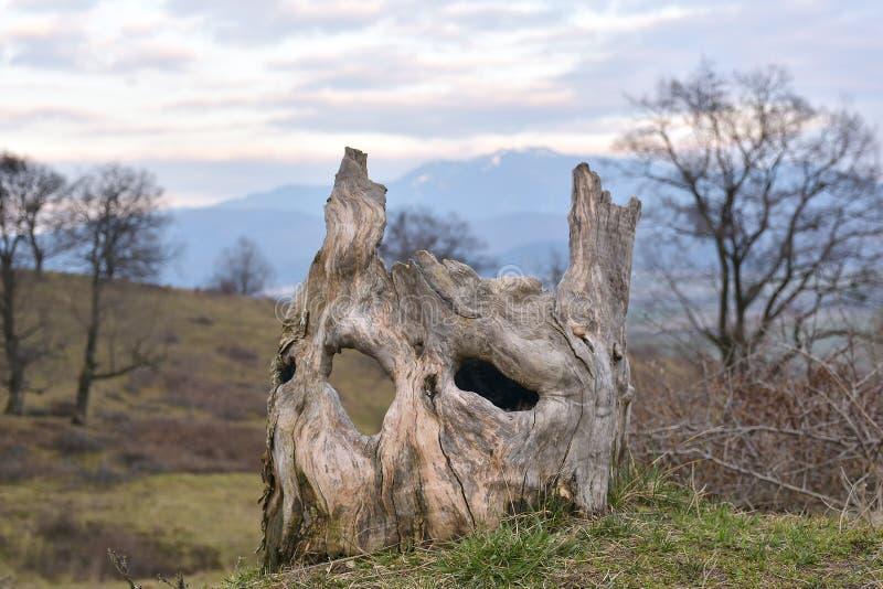 Trädstammen ser som mänsklig framsida arkivbild