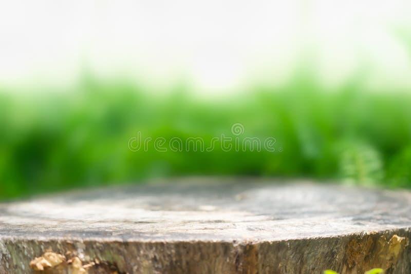 Trädstubbe för produktskärmmontagar Naturlig bakgrund arkivfoton