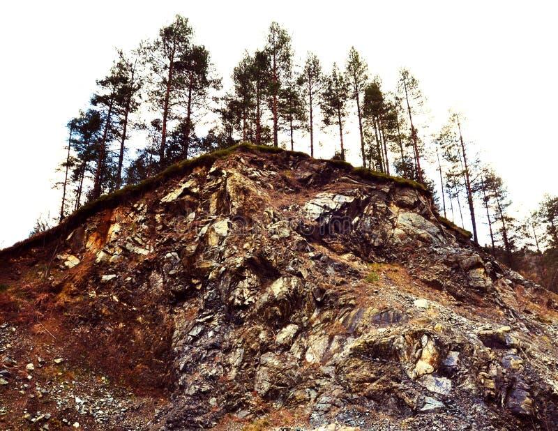 Trädträd på jordskred arkivbild