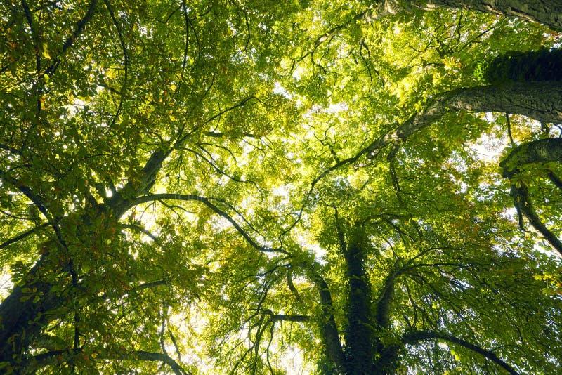 Trädtreetops arkivbild