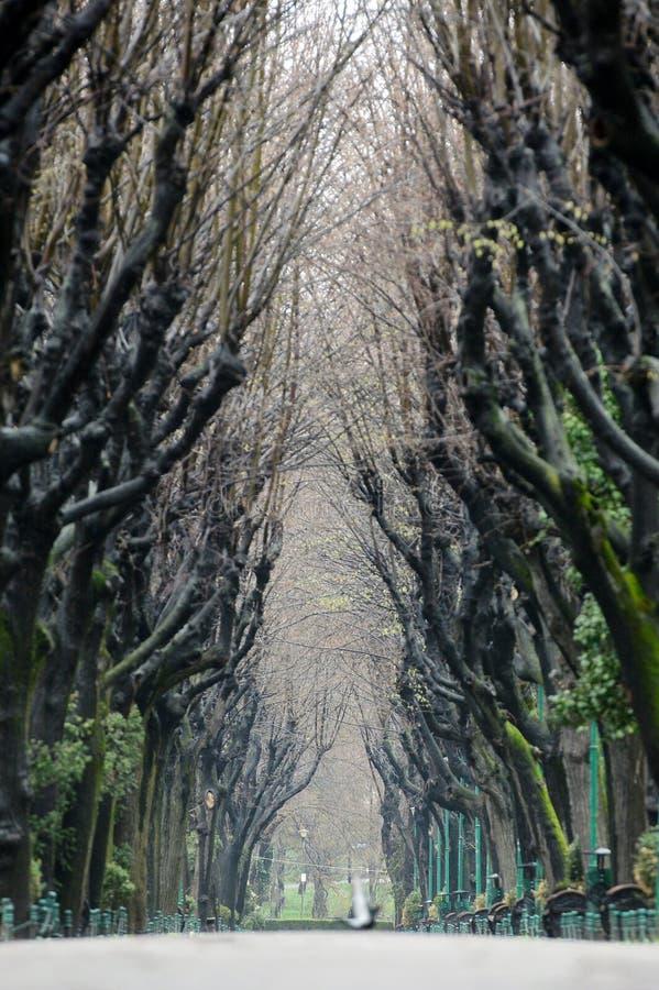 Trädtunnel