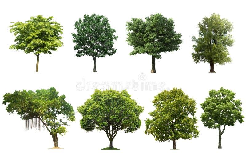 Träduppsättning som isoleras på vit bakgrund royaltyfri fotografi