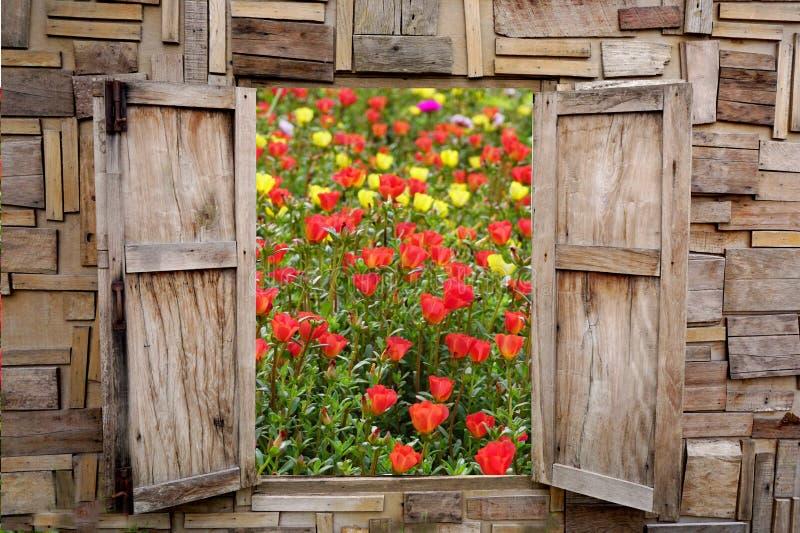 Träfönsteröppning med sikt av den härliga vårblommaträdgården arkivbild