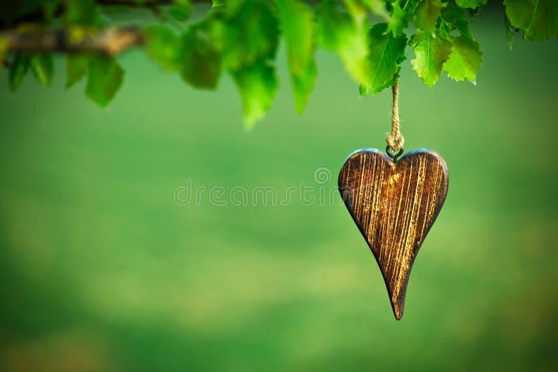 Träform av hjärta arkivbild