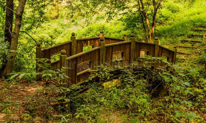 Träfotbron i en skogsmark parkerar arkivfoton