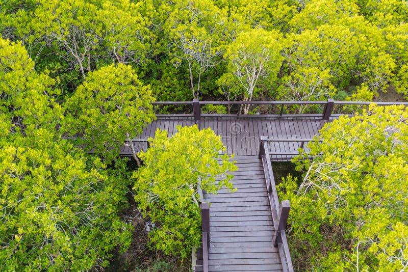 Trägångbana som avskiljer den härliga skogen arkivbilder