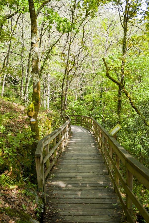 Trägångbana som går till och med en skog på en solig dag royaltyfria foton