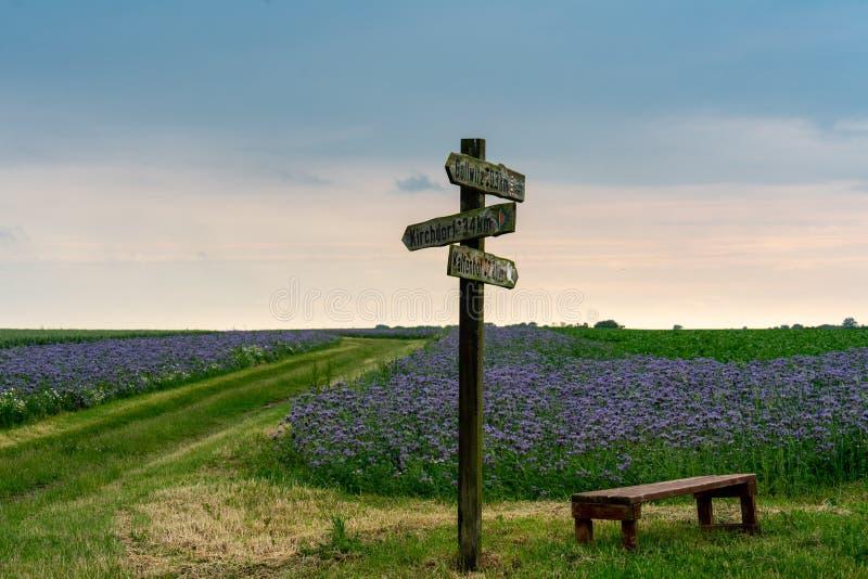 Trägammal teckenstolpe i ett fält av blåa blommande blommor arkivfoto