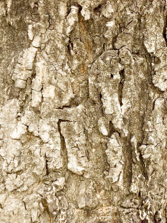 Trägammal textur för stam för skällträd grungy grov arkivfoto