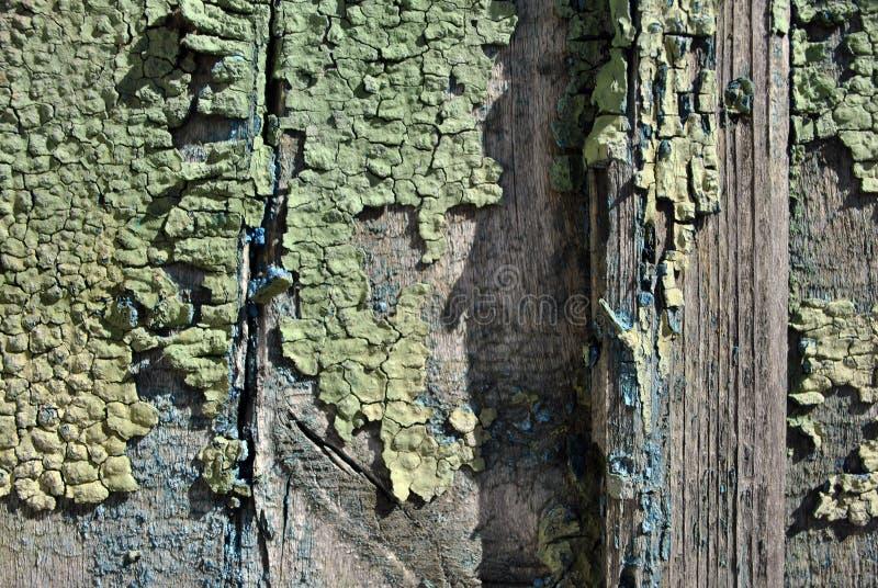 Trägammal väggyttersida som målas med grön gul sjaskig målarfärg, horisontalgrungebakgrundstextur, slut upp arkivbilder