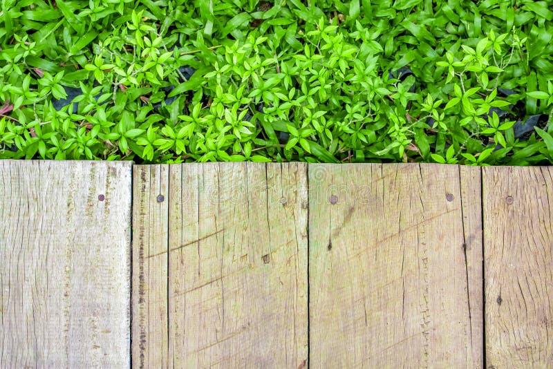 Trägolv med bakgrund för grön växt arkivbild