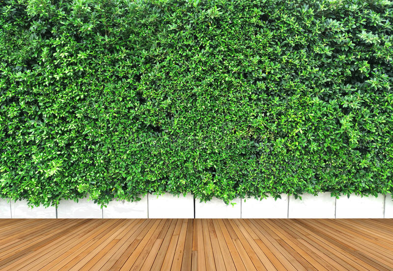 Trägolvet och lodlinjen arbeta i trädgården med det tropiska gröna bladet royaltyfria bilder