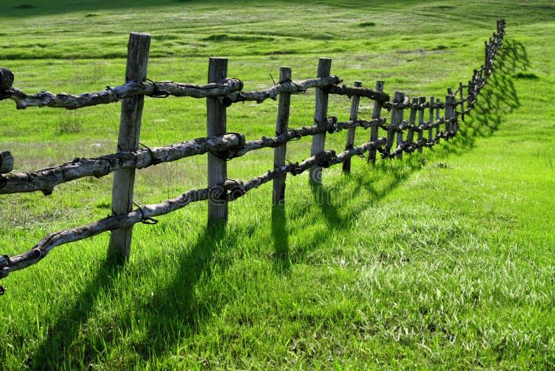 trägrön äng för staket royaltyfri bild