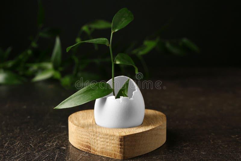Trähållare med äggskalet och filialen royaltyfria foton