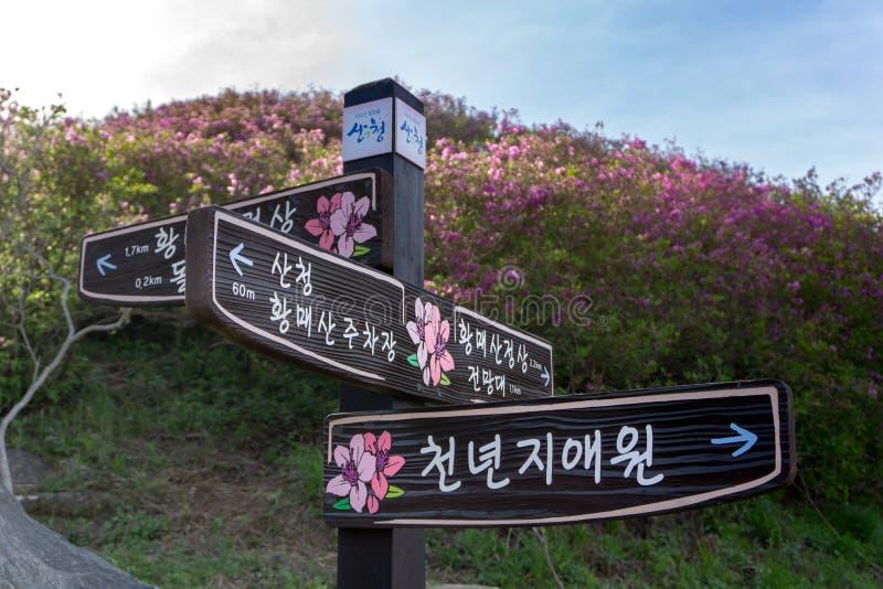 Trähandbokstolpen lokaliserar in i det Hwangmaesan landet parkerar med den rosa kungliga azaleablomman eller cheoljjuk på backgre arkivfoto