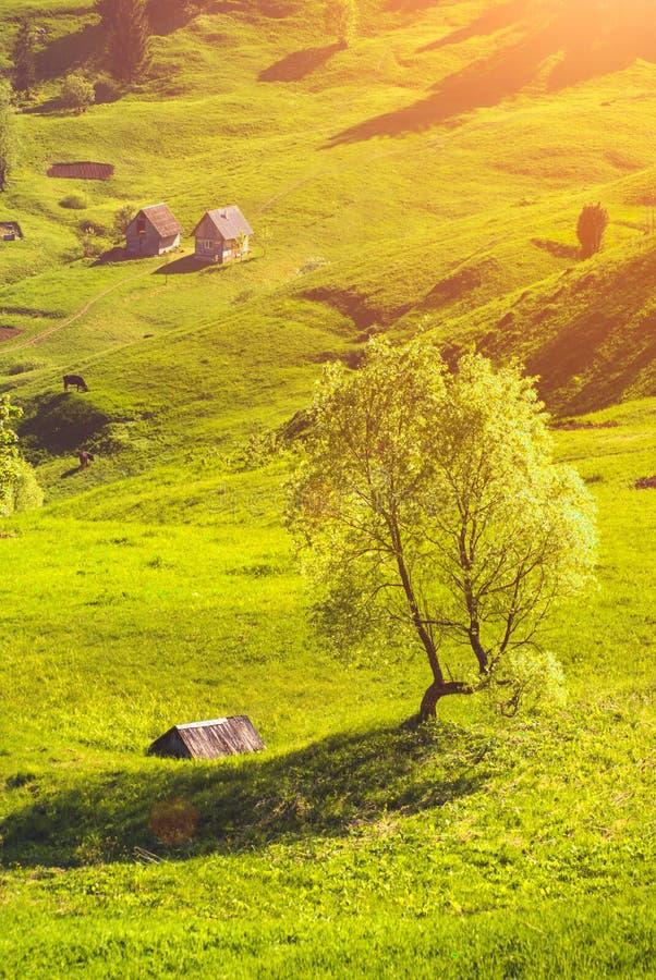 Trähus i ett Spring Valley arkivbild
