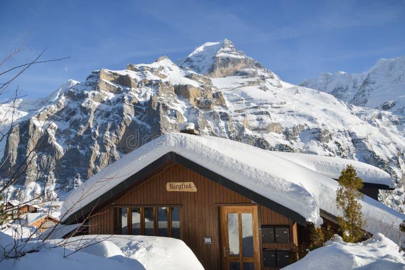 Trähus som täckas av snö med det majestätiska Jungfrau maximumet i bakgrund i by av Murren, Schweiz royaltyfri foto