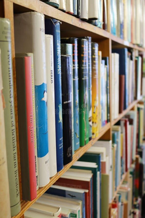 Trähyllor av böcker i ett arkiv eller en bok shoppar eller bokhandeln royaltyfria foton