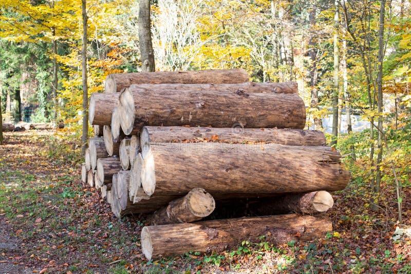 Träjournaler av sörjer trän i skogen högg av nytt trädjournaler som överst staplas upp av de royaltyfri bild