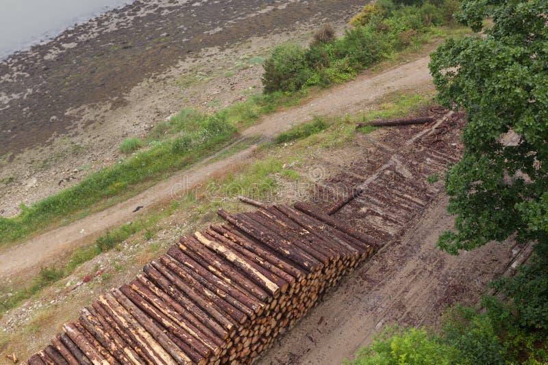 Träjournaler av sörjer trän i skogen som staplas i en hög Nytt högg av trädjournaler som staplas upp överst av de i en hög arkivbilder
