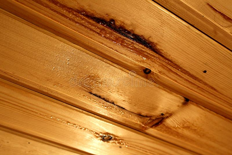 Träkåda bildade på taket tack vare värmen i bastun royaltyfri bild