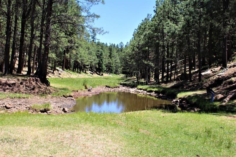 Träkanjon sjö, Coconino County, Arizona, Förenta staterna royaltyfria foton