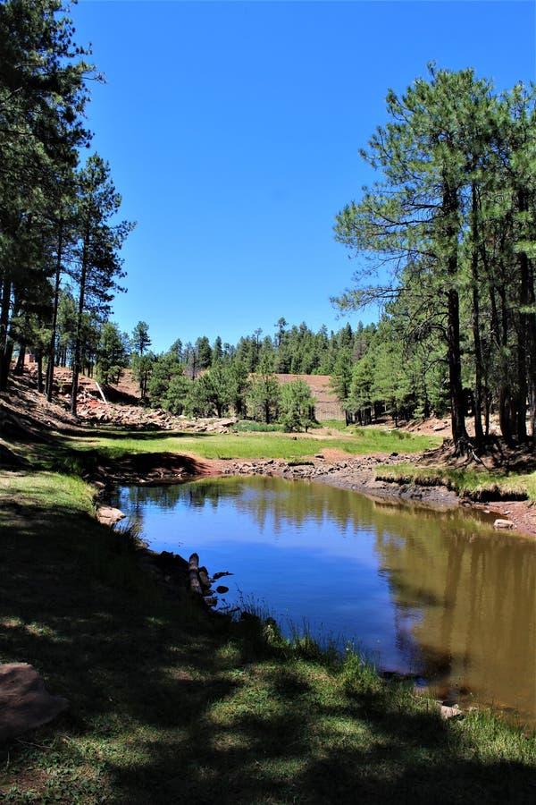 Träkanjon sjö, Coconino County, Arizona, Förenta staterna royaltyfri foto