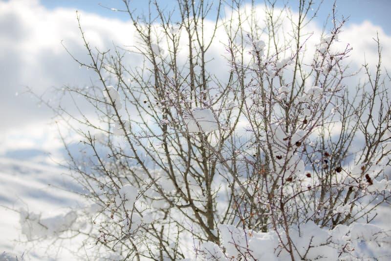 Träkapell i en norr snöig forestWinter Vinter i bergby royaltyfri fotografi