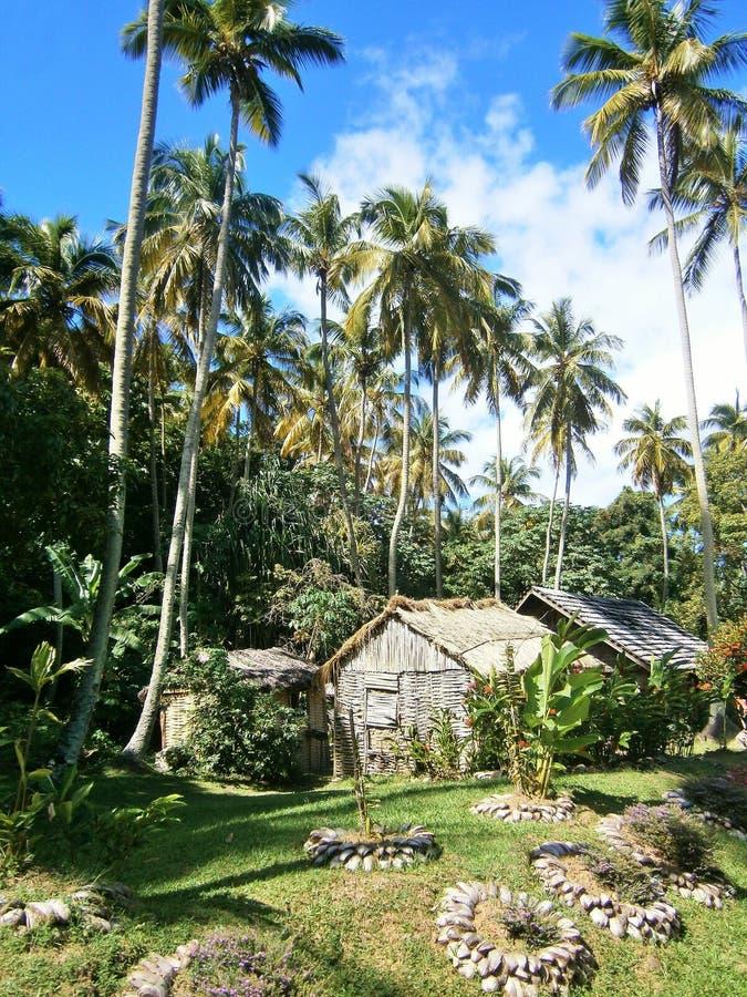 Träkojaundpalmträd i det karibiskt royaltyfri bild