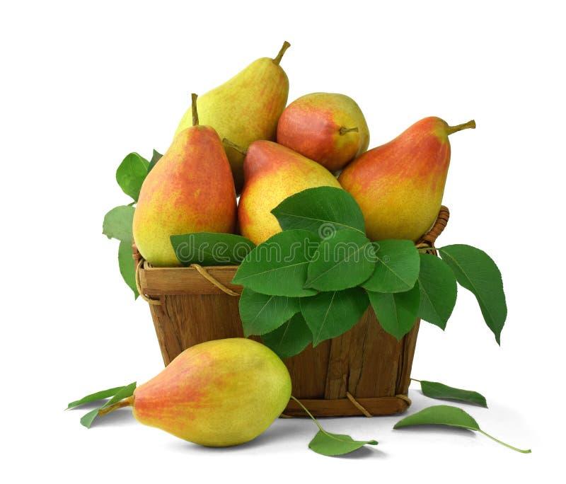 Träkorg med päron Mogna saftiga päron med sidor isolerat arkivbild