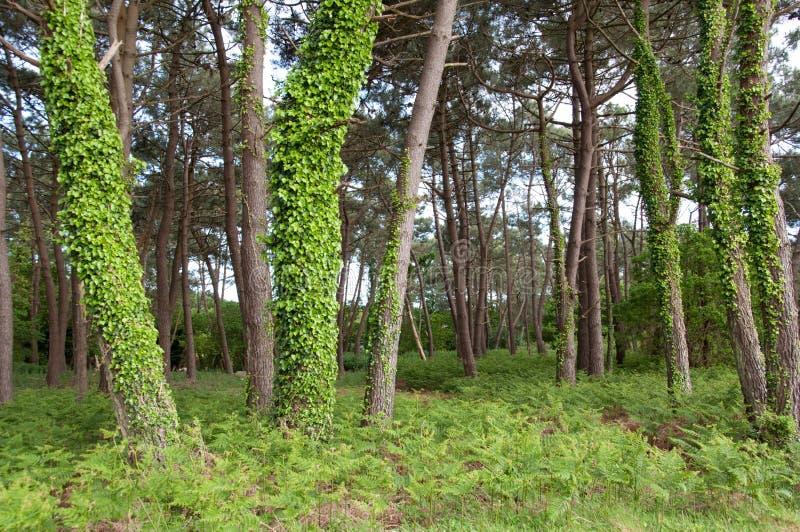Trän av Carnac, Frankrike arkivbilder