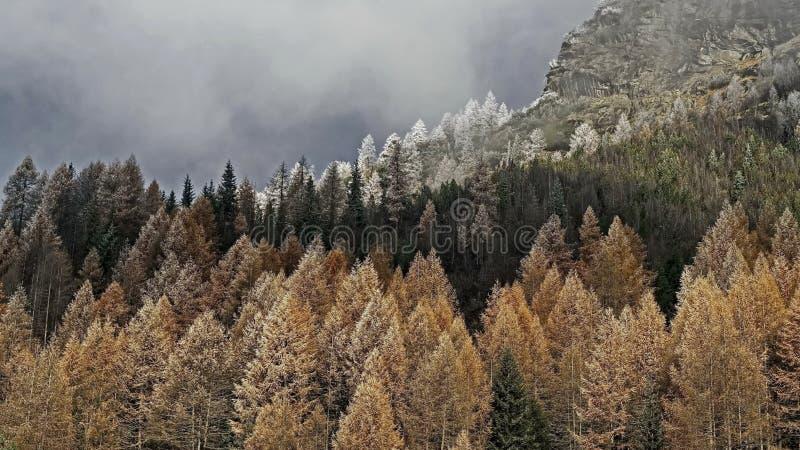 trän för barrskogbergväg Morgonrimfrost på träden första rimfrost royaltyfria bilder