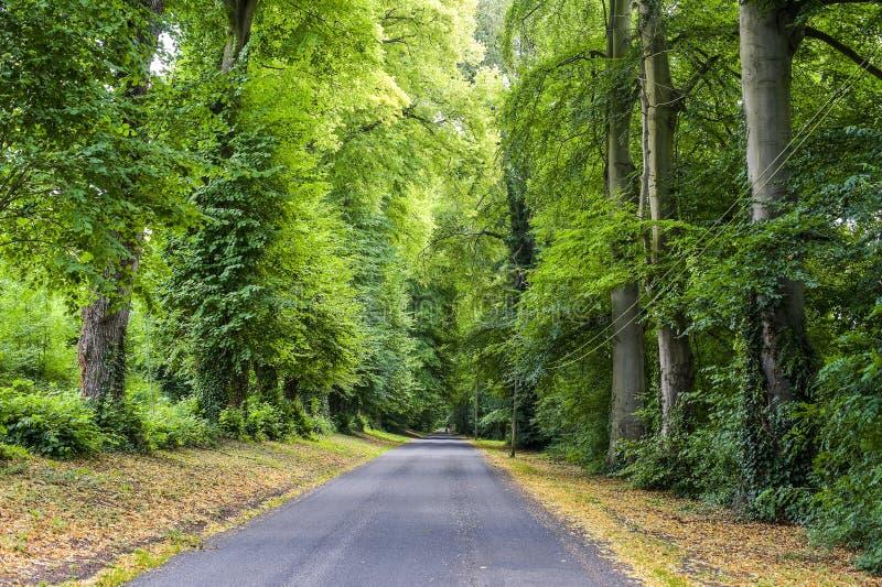 Trän i Normandy arkivbilder