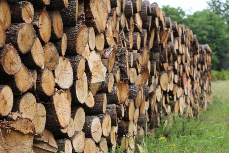 Trän i skogen royaltyfria bilder