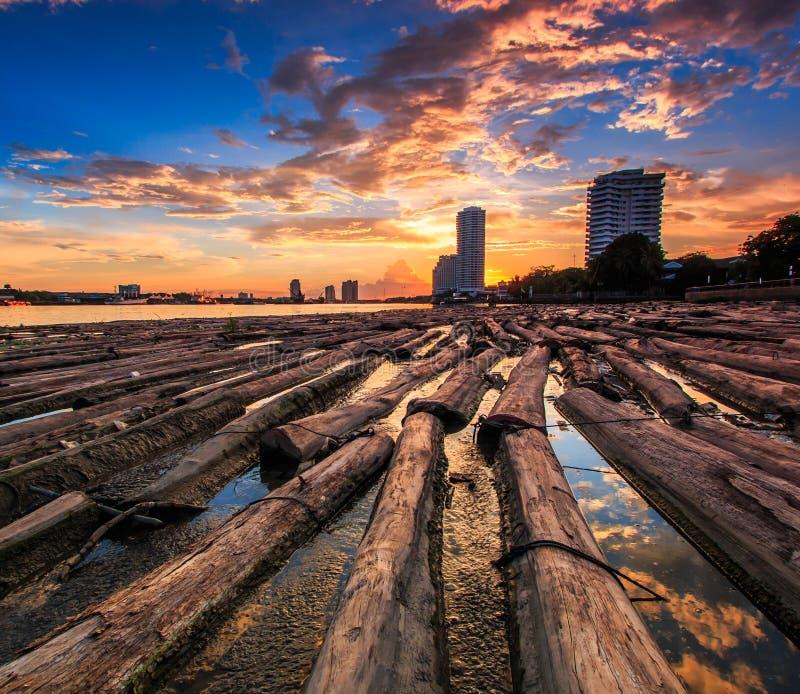 Trän i vattnet med solnedgånghimmel arkivbilder