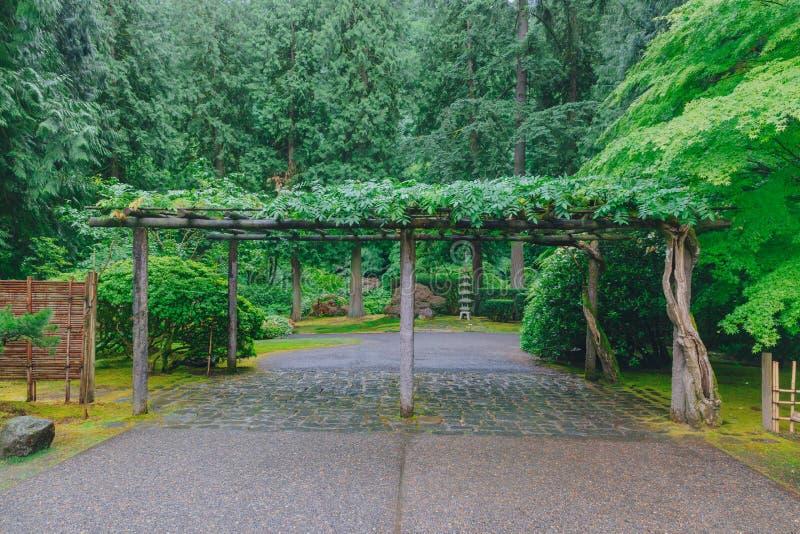 Tränyckel bland träd på Portland den japanska trädgården, Portland, USA fotografering för bildbyråer