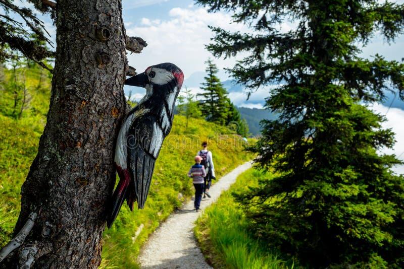 Träprickig hackspett på ett träd på den alpina slingan arkivfoto