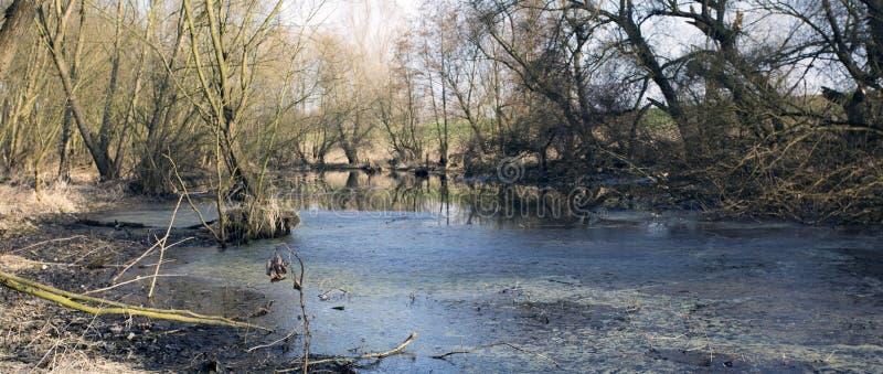 Träsk i höst Kall mörk sjö i kallt melankoliskt landskap för urtids- skog arkivfoto
