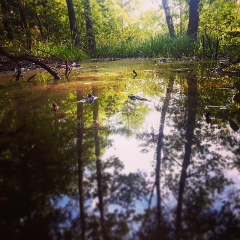 Träskfärger fotografering för bildbyråer