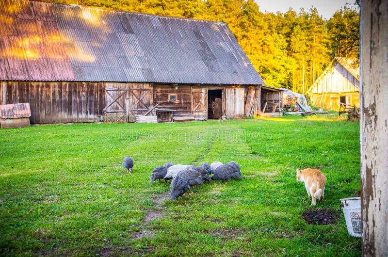 Träskjul och små fåglar i lantgård royaltyfria foton