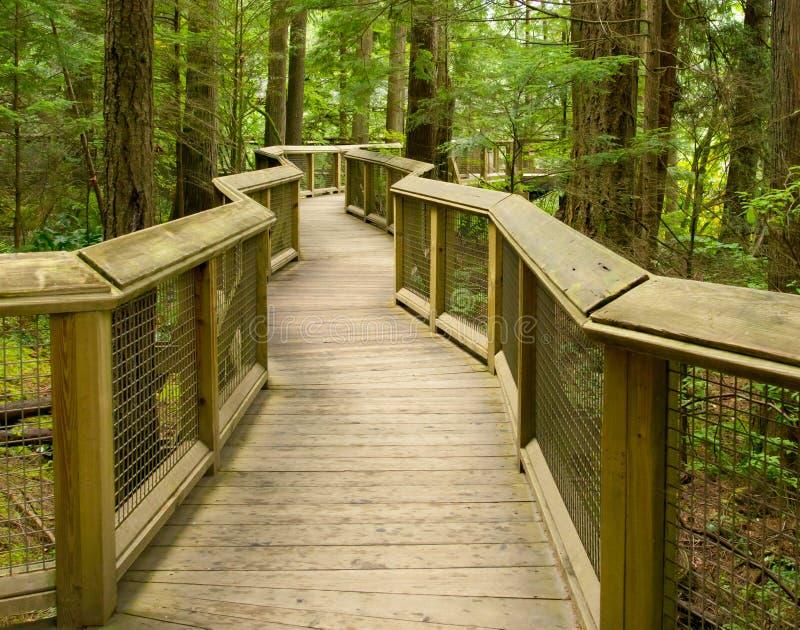 träskogwalkway royaltyfria bilder