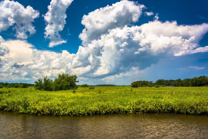 Träskområde av Tomoka River, på Tomoka State Park, Florida royaltyfri bild