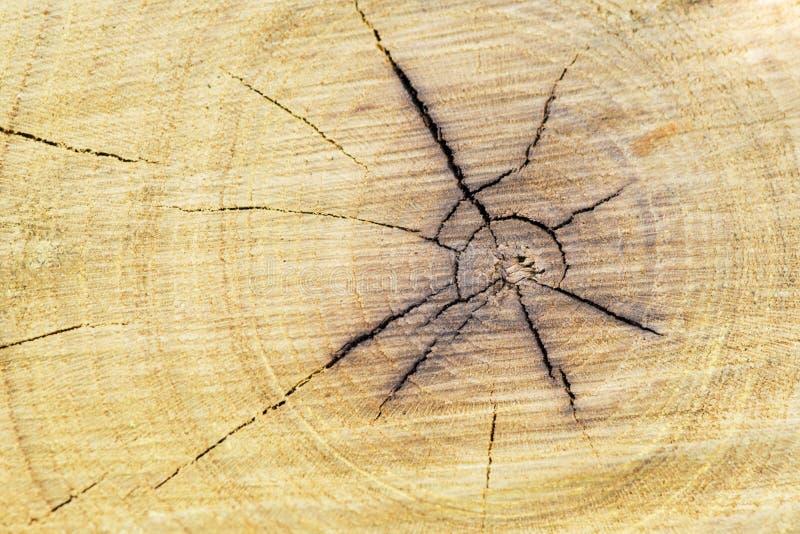 Träsnittbakgrund Textur av treestubben Avsnitt av stammen med årliga cirklar fotografering för bildbyråer
