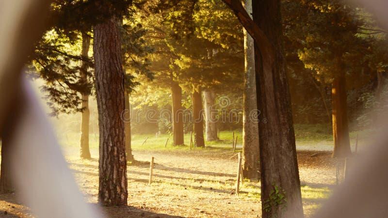 Trästaket med Trees royaltyfri fotografi