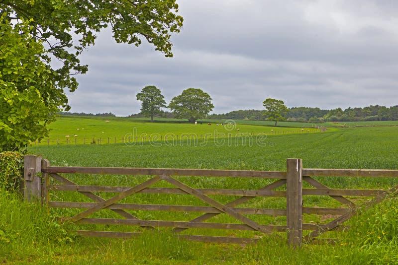 Trästaket någonstans i England arkivbild