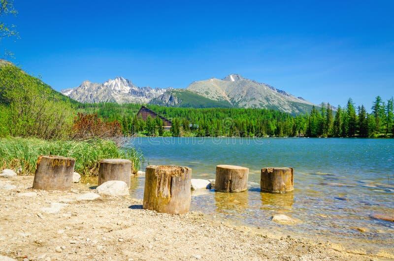 Trästammar på stranden av bergsjön royaltyfri fotografi