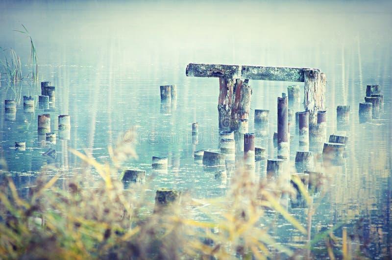 Trästolpar i sjön royaltyfri fotografi
