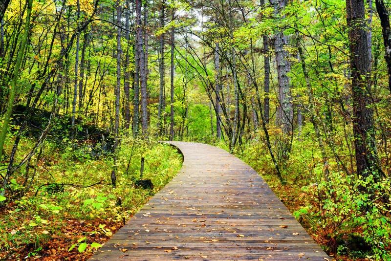 Trästrandpromenad över skogen, Jiuzhaigou nationalpark, Kina royaltyfri bild