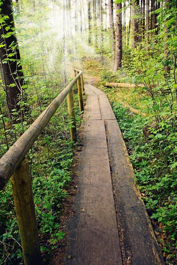 Trästrandpromenad i skogen med solsken royaltyfria bilder