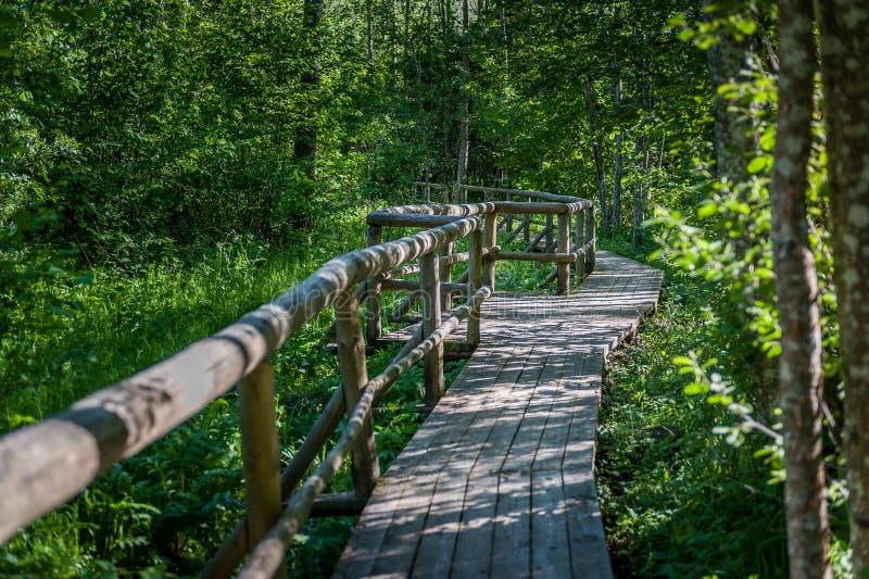 Trästrandpromenad på den fotvandra slingan som korsar en mystisk Pokaini skog i Lettland arkivfoton